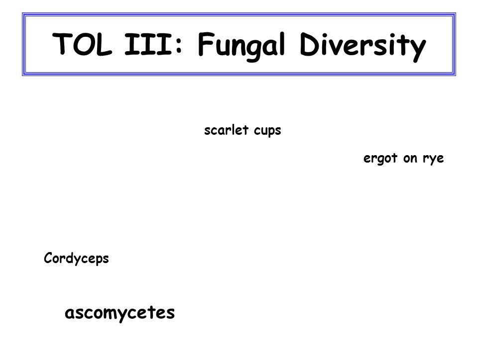 TOL III: Fungal Diversity ascomycetes Cordyceps scarlet cups ergot on rye