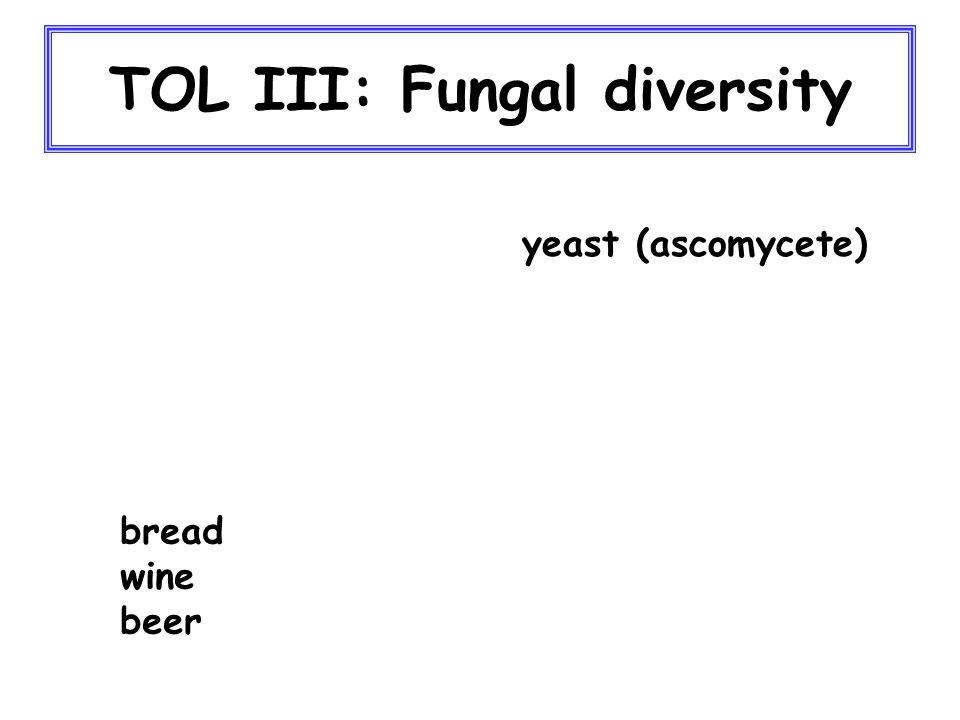 TOL III: Fungal diversity yeast (ascomycete) bread wine beer
