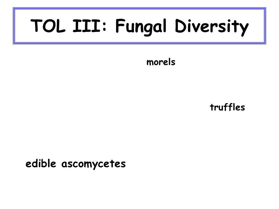 TOL III: Fungal Diversity edible ascomycetes morels truffles
