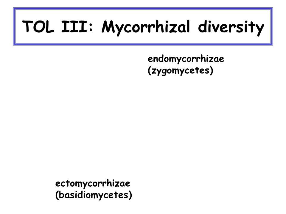 TOL III: Mycorrhizal diversity endomycorrhizae (zygomycetes) ectomycorrhizae (basidiomycetes)