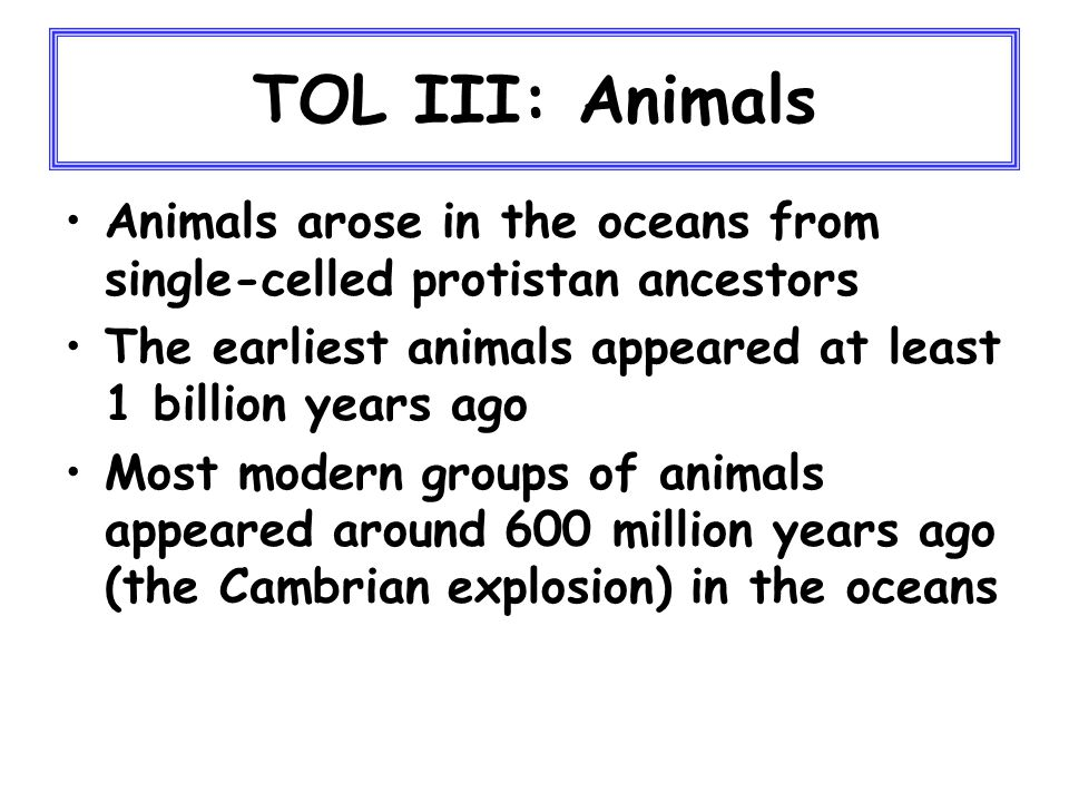TOL III: Animals Animals arose in the oceans from single-celled protistan ancestors The earliest animals appeared at least 1 billion years ago Most modern groups of animals appeared around 600 million years ago (the Cambrian explosion) in the oceans