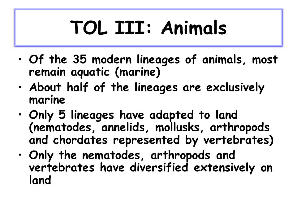 TOL III: Animals Of the 35 modern lineages of animals, most remain aquatic (marine) About half of the lineages are exclusively marine Only 5 lineages have adapted to land (nematodes, annelids, mollusks, arthropods and chordates represented by vertebrates) Only the nematodes, arthropods and vertebrates have diversified extensively on land