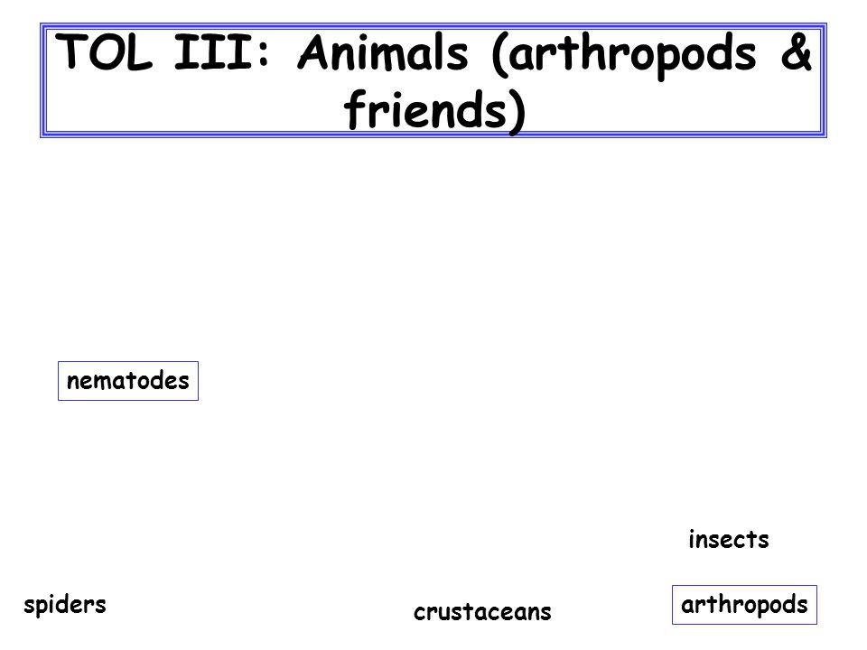 TOL III: Animals (arthropods & friends) nematodes arthropods spiders crustaceans insects