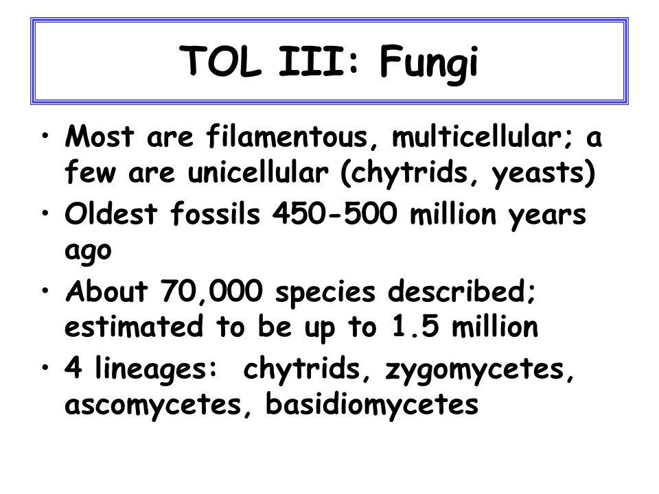 TOL III: Fungi chytrids zygosascos basidios