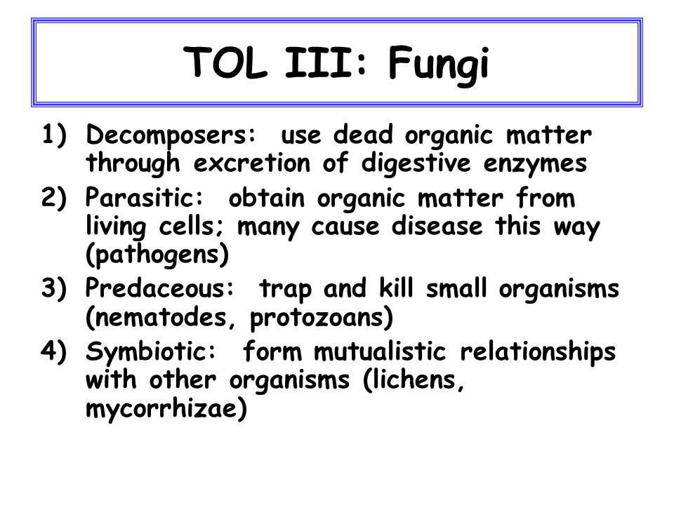 TOL III: Fungi Structure, Growth and Reproduction -usually consist of hyphae (thread- like filaments) -mass of hyphae = mycelium -grow under a wide range of conditions -reproduction mostly sexual by spores; but asexual reproduction is common