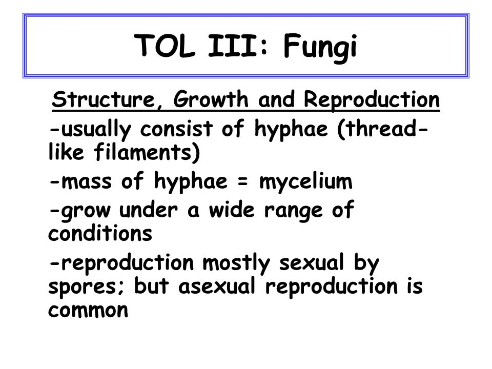 TOL III: Animals (major lineages) The next major adaptation, after the evolution of tissues, was the split between radial vs.