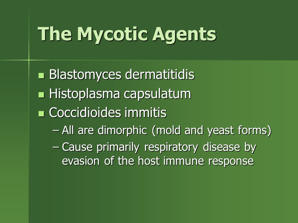 The Mycotic Agents Blastomyces dermatitidis Blastomyces dermatitidis Histoplasma capsulatum Histoplasma capsulatum Coccidioides immitis Coccidioides immitis –All are dimorphic (mold and yeast forms) –Cause primarily respiratory disease by evasion of the host immune response