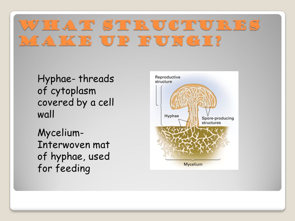 What structures make up Fungi.