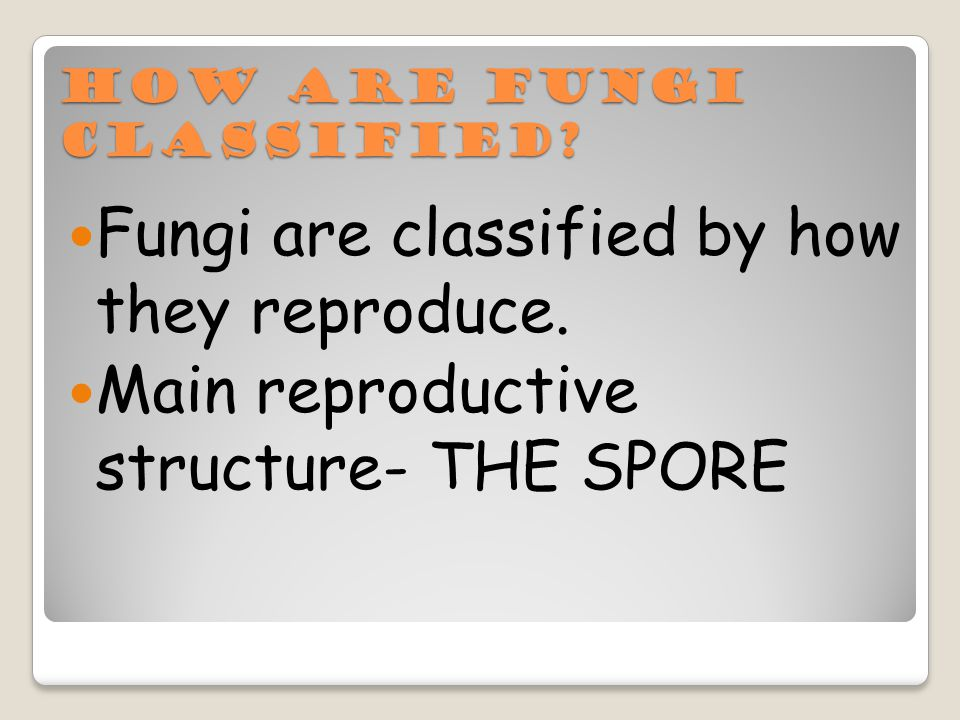 How are Fungi classified. Fungi are classified by how they reproduce.