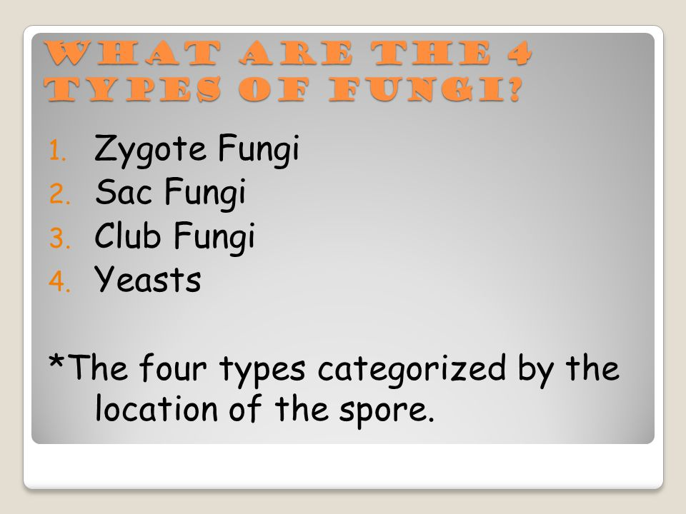 What are the 4 types of fungi. 1. Zygote Fungi 2.