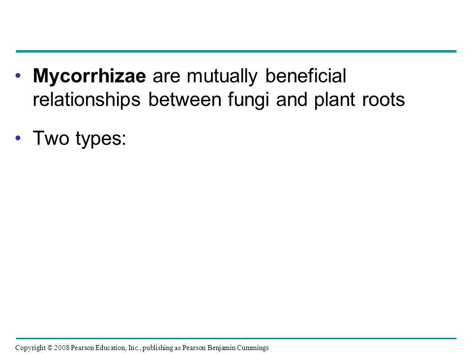 Copyright © 2008 Pearson Education, Inc., publishing as Pearson Benjamin Cummings Mycorrhizae are mutually beneficial relationships between fungi and