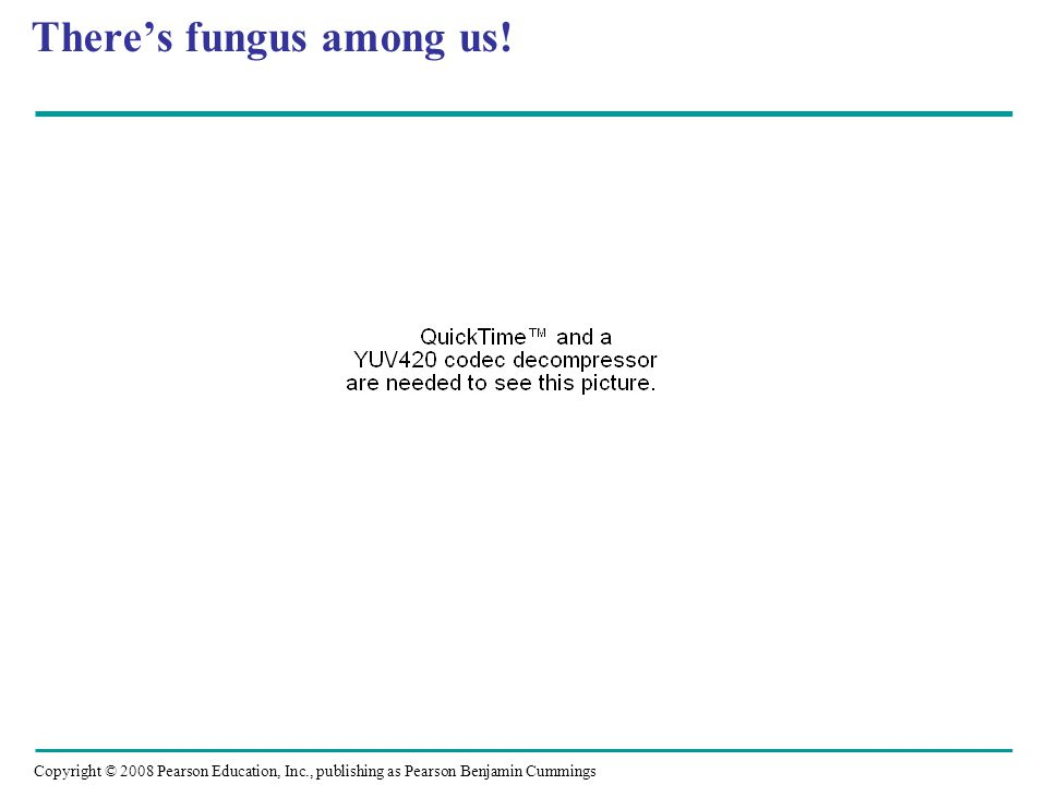 Copyright © 2008 Pearson Education, Inc., publishing as Pearson Benjamin Cummings There's fungus among us!