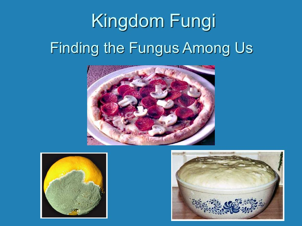 Characteristics of Fungi EukaryoticEukaryotic Most are MulticellularMost are Multicellular Filamentous body planFilamentous body plan Heterotrophic by AbsorptionHeterotrophic by Absorption Produce spores by sexual and asexual reproductionProduce spores by sexual and asexual reproduction Haploid for part or most of life cycleHaploid for part or most of life cycle Cell wall made of chitinCell wall made of chitin No movement: change location by growth of body or dispersion of sporesNo movement: change location by growth of body or dispersion of spores