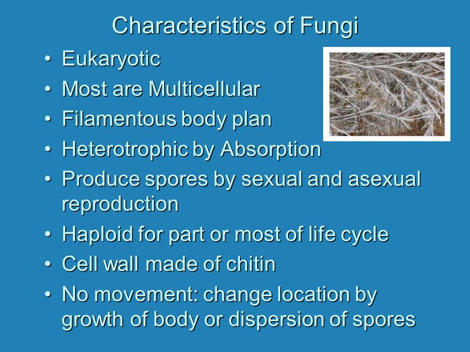 The Filamentous Body of a Fungus (a) Mycelium (b) Individual Hyphae (c) Hyphal Cells (cutaway) Cell Walls Septum Pore Cytoplasm Haploid Nuclei