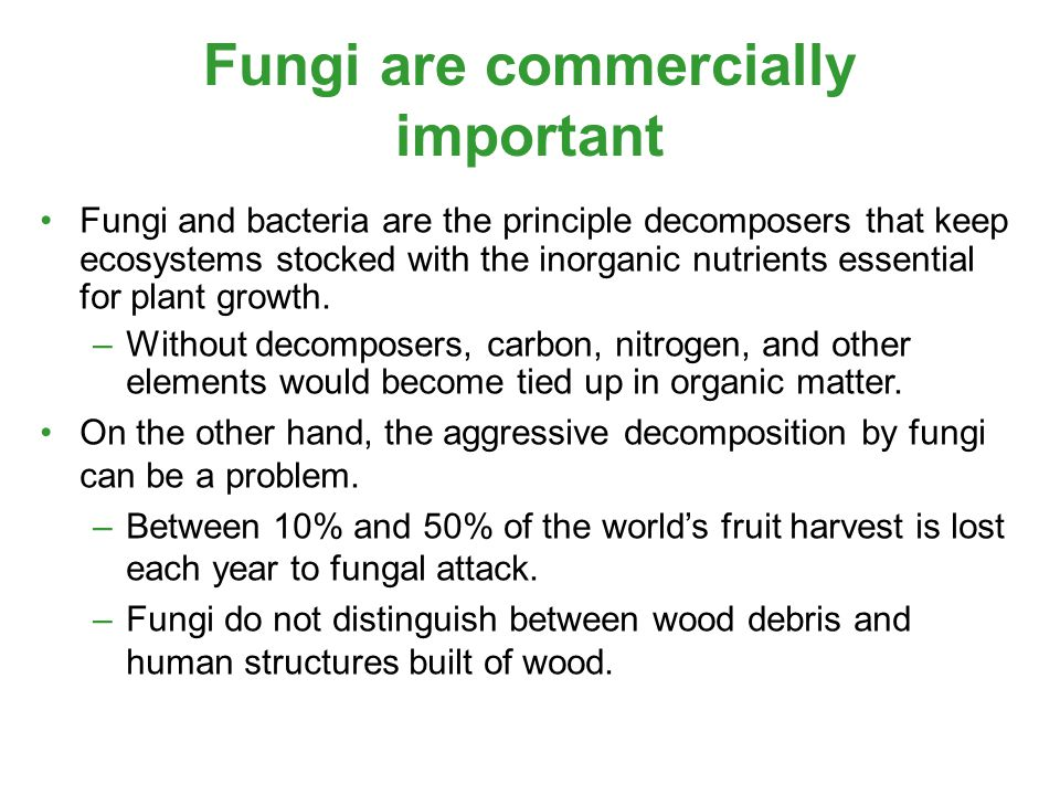Fungi are commercially important Fungi and bacteria are the principle decomposers that keep ecosystems stocked with the inorganic nutrients essential for plant growth.