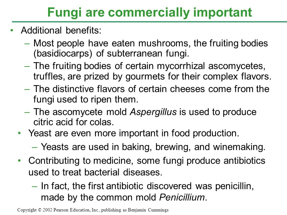 Additional benefits: –Most people have eaten mushrooms, the fruiting bodies (basidiocarps) of subterranean fungi.