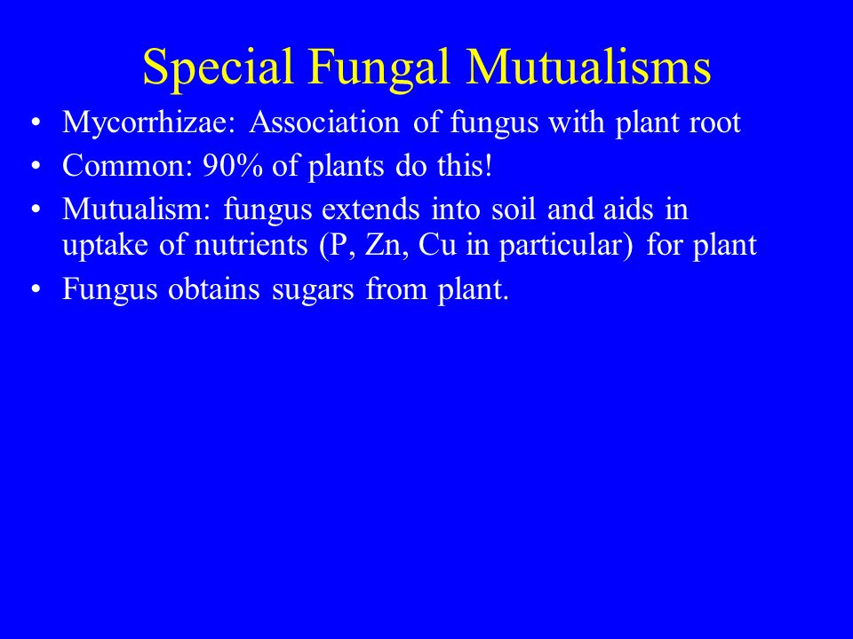 Special Fungal Mutualisms Mycorrhizae: Association of fungus with plant root Common: 90% of plants do this.