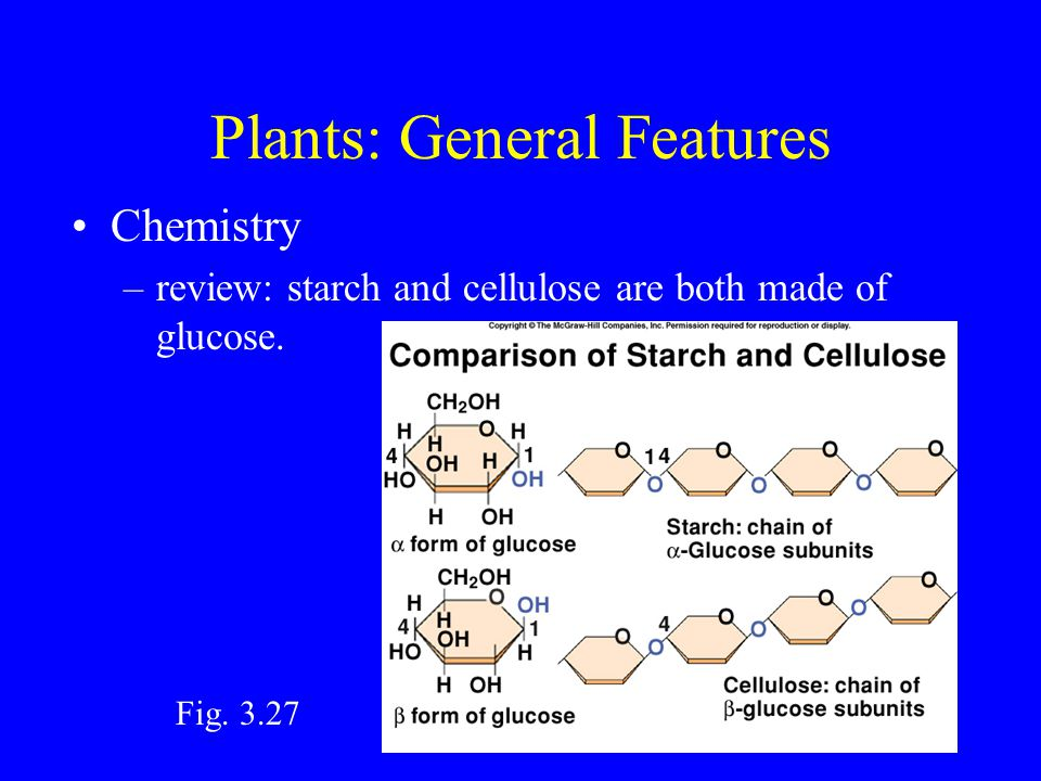 Plants: General Features Chemistry –review: starch and cellulose are both made of glucose.