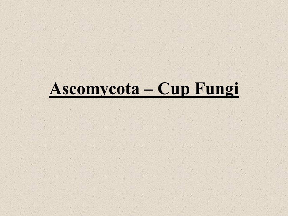 Ascomycota – Cup Fungi