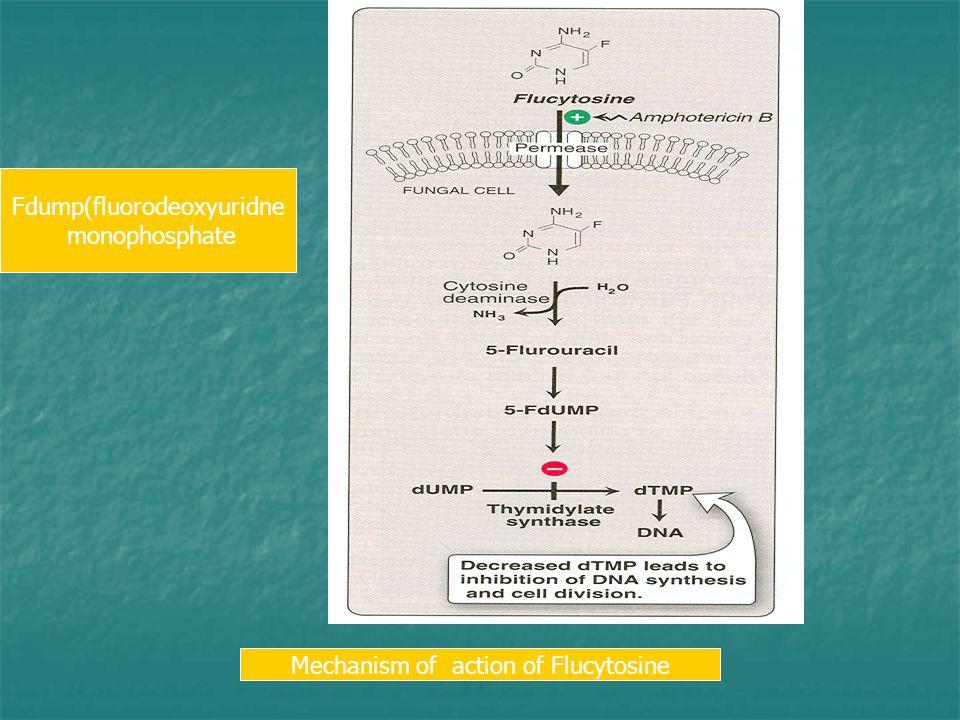 Mechanism of action of Flucytosine Fdump(fluorodeoxyuridne monophosphate