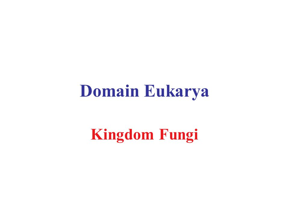 Domain Eukarya Kingdom Fungi