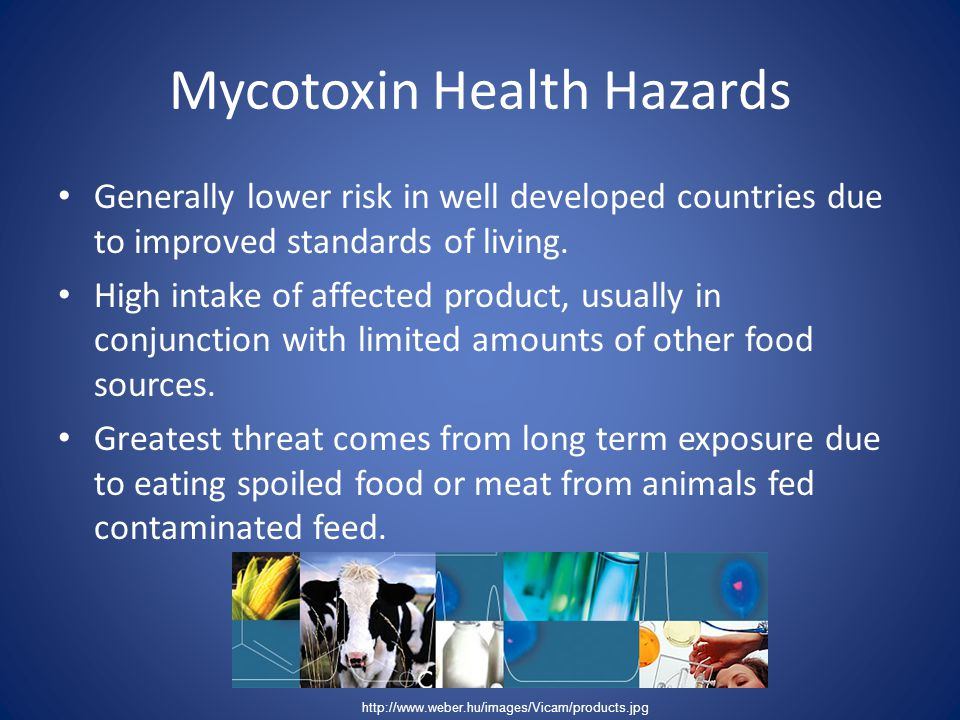 Mycotoxin Health Hazards Generally lower risk in well developed countries due to improved standards of living. High intake of affected product, usuall