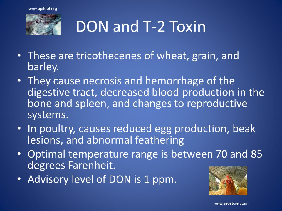 DON and T-2 Toxin These are tricothecenes of wheat, grain, and barley. They cause necrosis and hemorrhage of the digestive tract, decreased blood prod