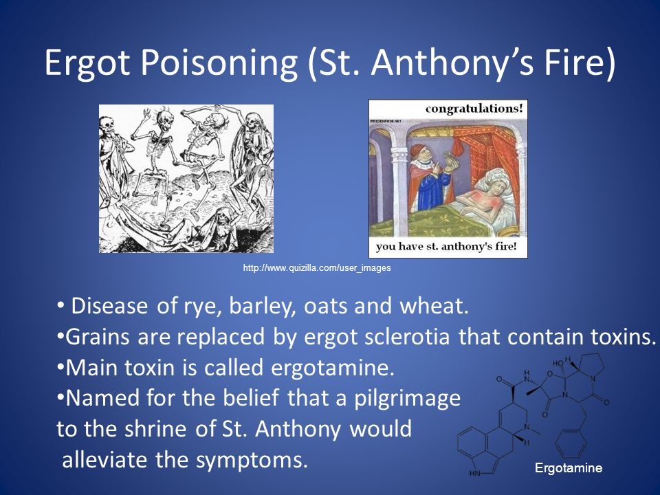 Ergot Poisoning (St. Anthony's Fire) Disease of rye, barley, oats and wheat. Grains are replaced by ergot sclerotia that contain toxins. Main toxin is