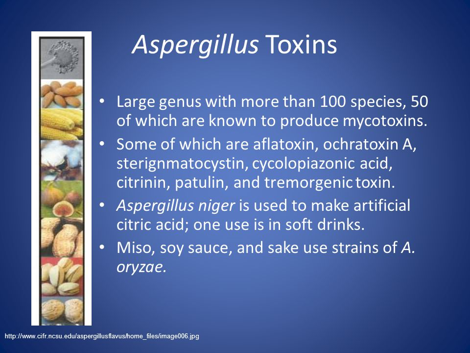 Aspergillus Toxins Large genus with more than 100 species, 50 of which are known to produce mycotoxins. Some of which are aflatoxin, ochratoxin A, ste