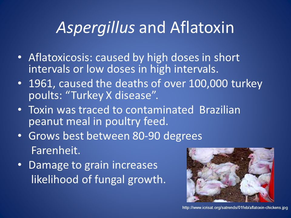 Aspergillus and Aflatoxin Aflatoxicosis: caused by high doses in short intervals or low doses in high intervals. 1961, caused the deaths of over 100,0