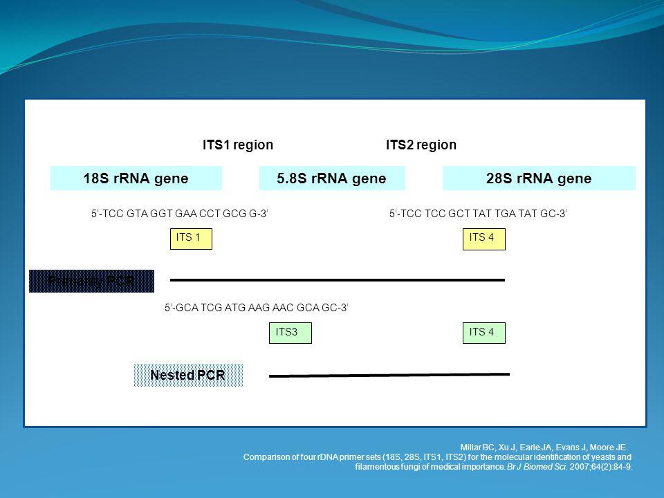 18S rRNA gene5.8S rRNA gene28S rRNA gene ITS1 regionITS2 region ITS 1ITS 4 5'-TCC GTA GGT GAA CCT GCG G-3'5'-TCC TCC GCT TAT TGA TAT GC-3' ITS3ITS 4 5'-GCA TCG ATG AAG AAC GCA GC-3' Nested PCR Primarily PCR Millar BC, Xu J, Earle JA, Evans J, Moore JE.