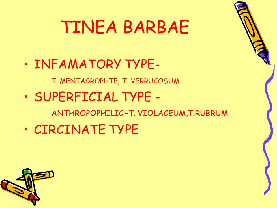 TINEA BARBAE INFAMATORY TYPE- T. MENTAGROPHTE, T.