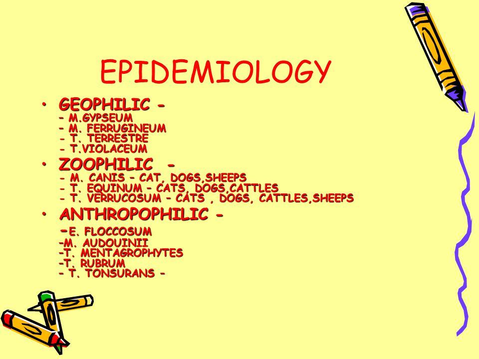 EPIDEMIOLOGY GEOPHILIC - – M.GYPSEUM – M. FERRUGINEUM - T.