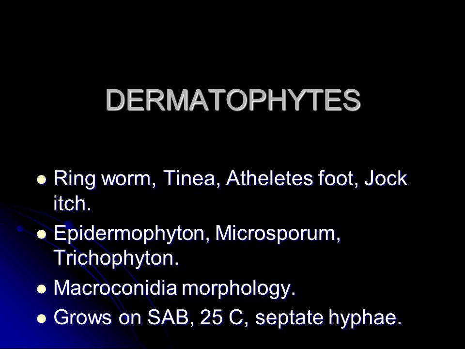 DERMATOPHYTES Ring worm, Tinea, Atheletes foot, Jock itch.