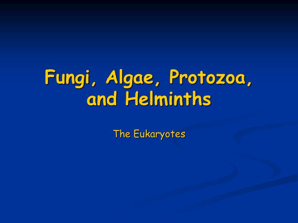 Fungi, Algae, Protozoa, and Helminths The Eukaryotes