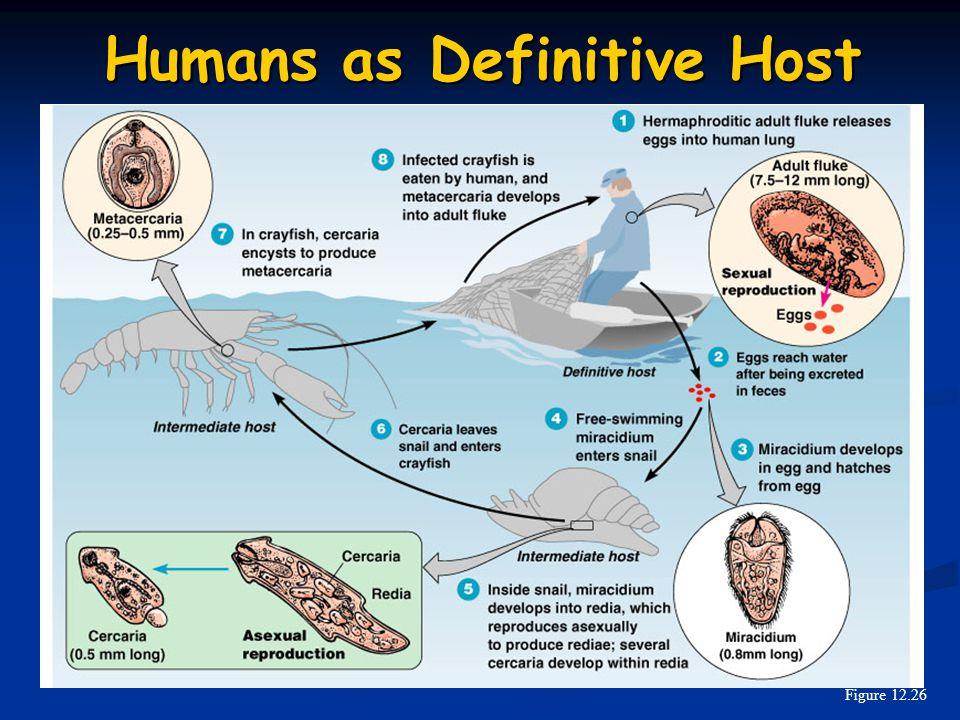 Humans as Definitive Host Figure 12.26