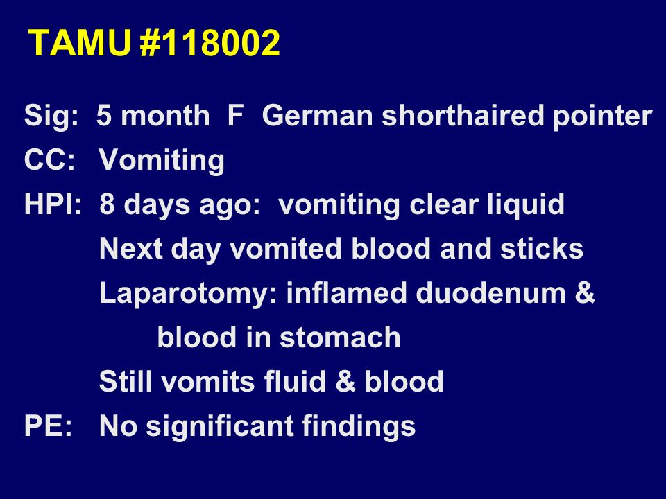 TAMU#118002 Sig: 5 month F German shorthaired pointer CC: Vomiting HPI: 8 days ago: vomiting clear liquid Next day vomited blood and sticks Laparotomy: inflamed duodenum & blood in stomach Still vomits fluid & blood PE: No significant findings