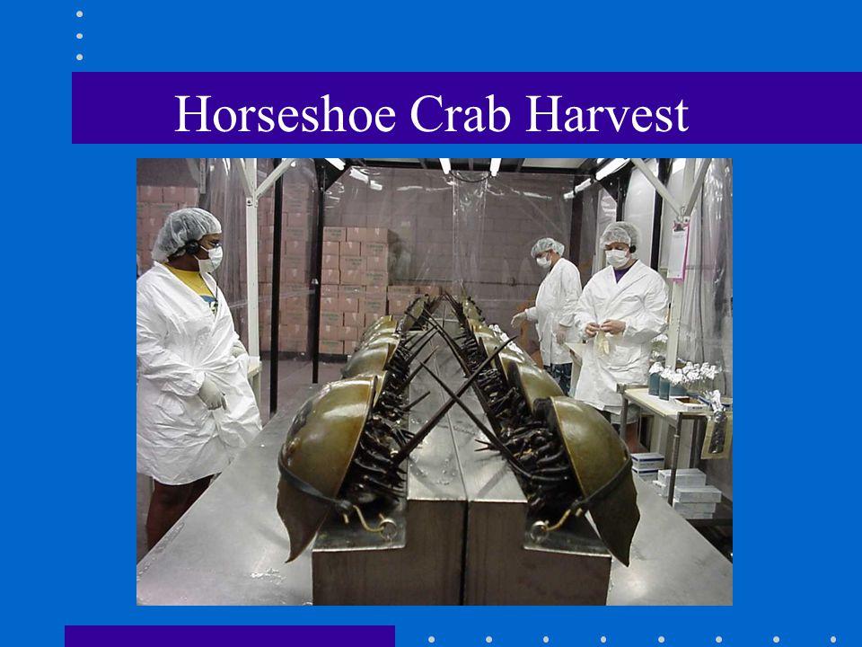 Horseshoe Crab Harvest