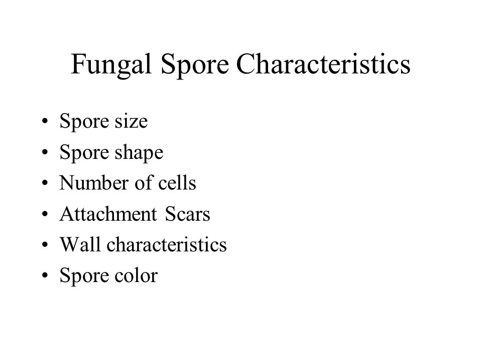 Fungal Spore Characteristics Spore size Spore shape Number of cells Attachment Scars Wall characteristics Spore color