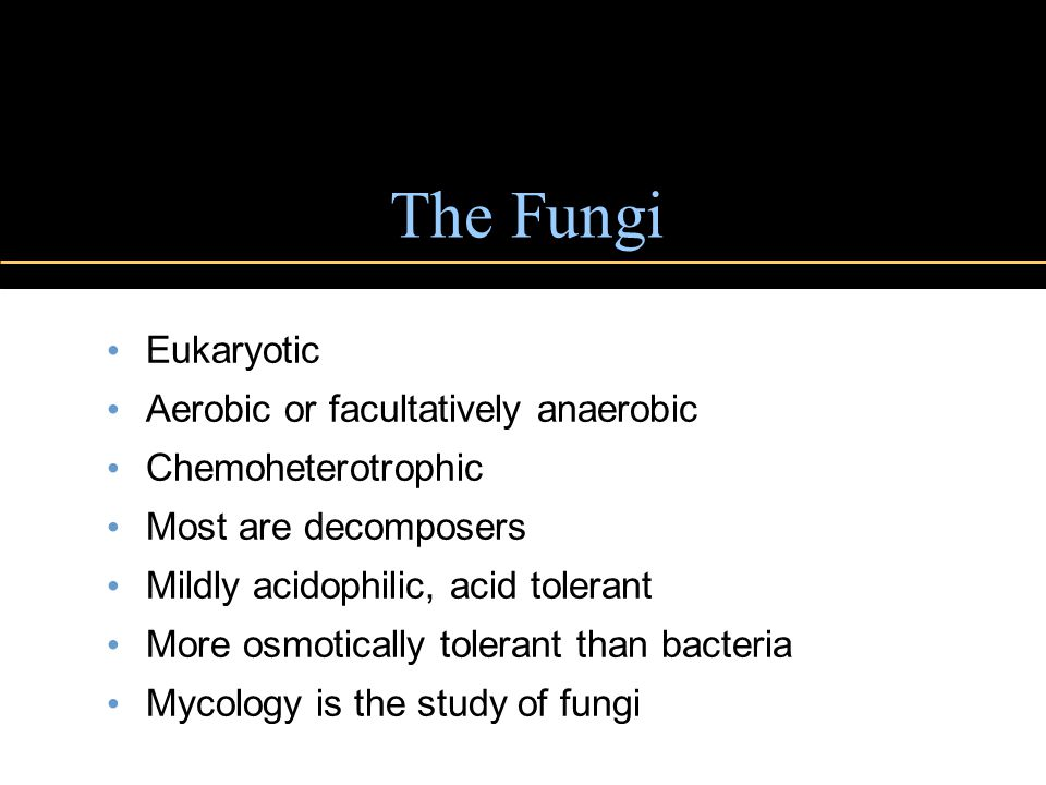 The Fungi Eukaryotic Aerobic or facultatively anaerobic Chemoheterotrophic Most are decomposers Mildly acidophilic, acid tolerant More osmotically tolerant than bacteria Mycology is the study of fungi