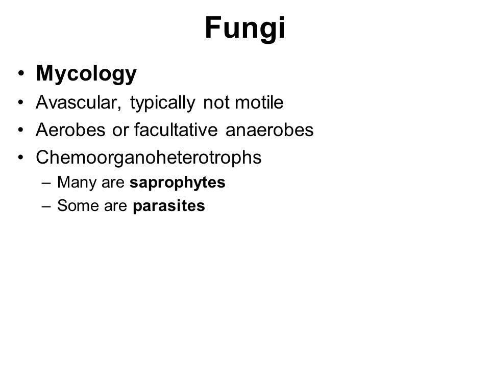Fungi Mycology Avascular, typically not motile Aerobes or facultative anaerobes Chemoorganoheterotrophs –Many are saprophytes –Some are parasites