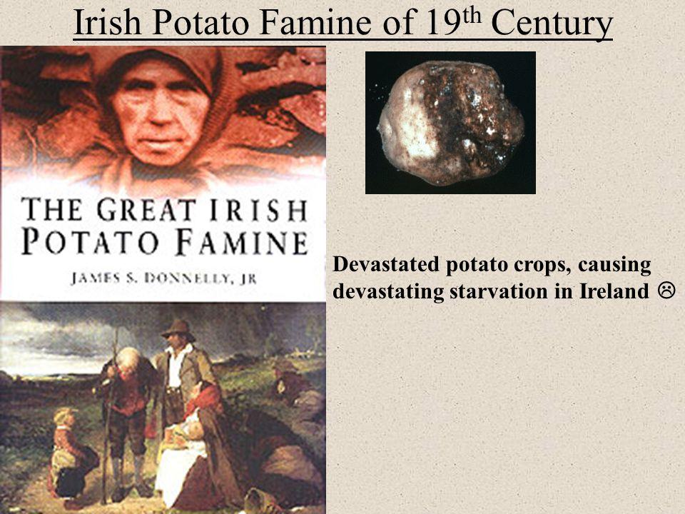 Irish Potato Famine of 19 th Century Devastated potato crops, causing devastating starvation in Ireland 