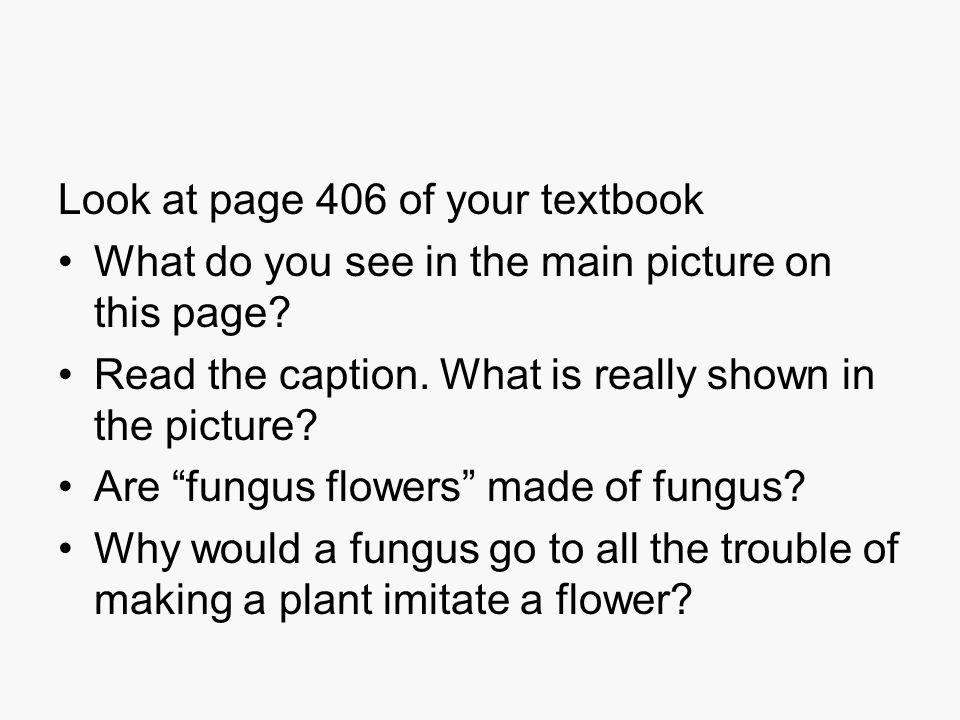 Mycelium What is it?