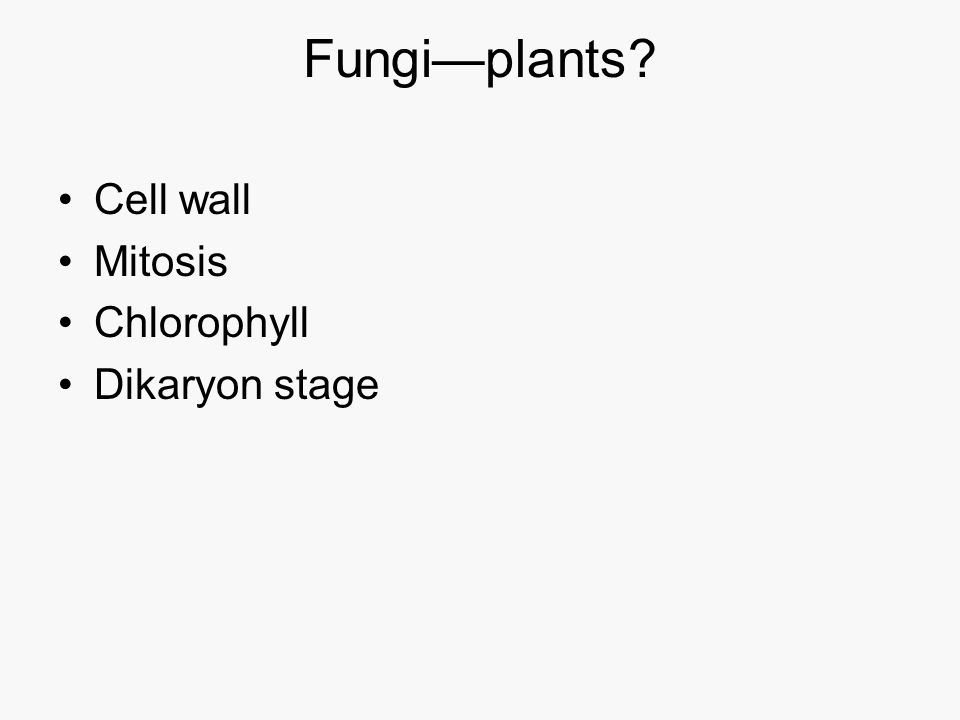 Other characteristics of Fungi Heterotrophs Digest food outside its body by secreted enzymes then absorb the nutrients Typically terrestrial Key decomposers of plant material Most derive their nutrition from plants Cell walls made of chitin