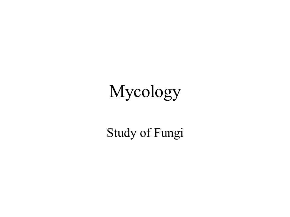 Mycology Study of Fungi
