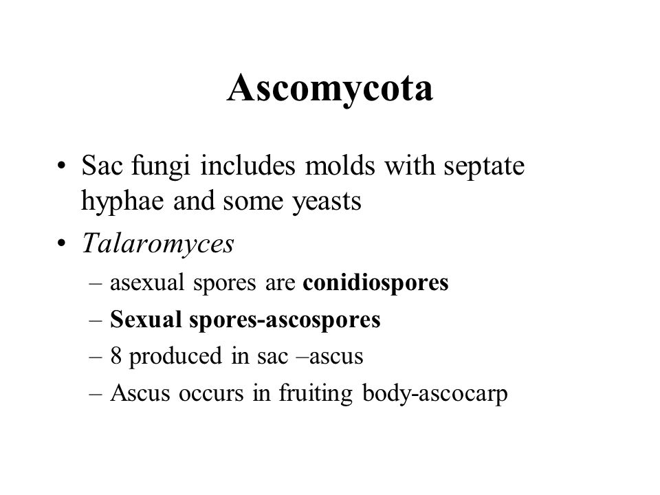 Ascomycota Sac fungi includes molds with septate hyphae and some yeasts Talaromyces –asexual spores are conidiospores –Sexual spores-ascospores –8 produced in sac –ascus –Ascus occurs in fruiting body-ascocarp