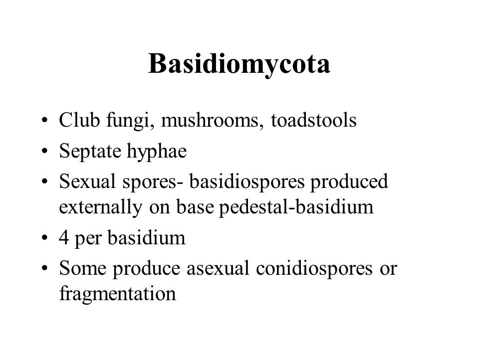 Basidiomycota Club fungi, mushrooms, toadstools Septate hyphae Sexual spores- basidiospores produced externally on base pedestal-basidium 4 per basidium Some produce asexual conidiospores or fragmentation