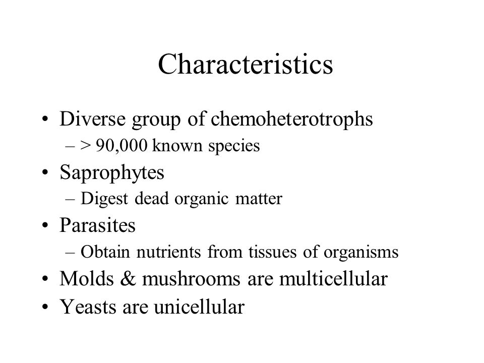 Characteristics Diverse group of chemoheterotrophs –> 90,000 known species Saprophytes –Digest dead organic matter Parasites –Obtain nutrients from tissues of organisms Molds & mushrooms are multicellular Yeasts are unicellular