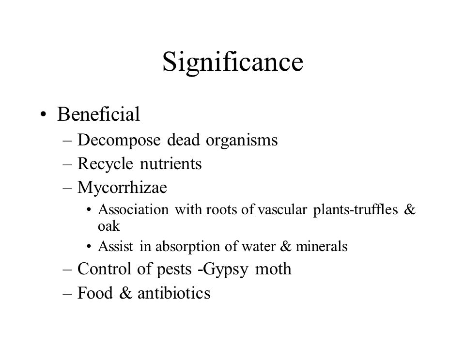 Significance Beneficial –Decompose dead organisms –Recycle nutrients –Mycorrhizae Association with roots of vascular plants-truffles & oak Assist in absorption of water & minerals –Control of pests -Gypsy moth –Food & antibiotics
