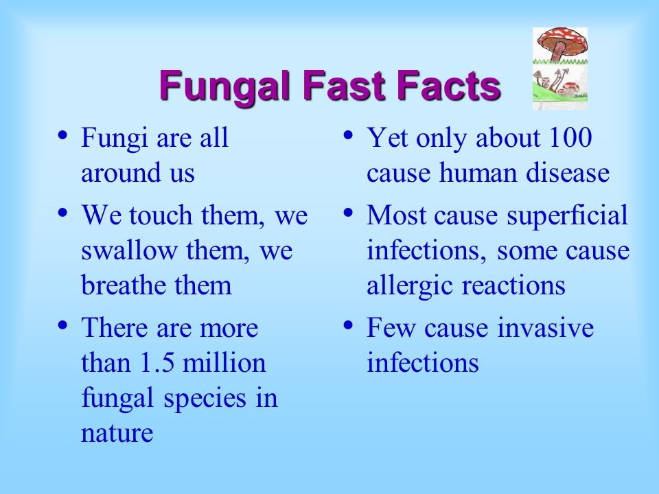 Fungal Fast Facts Fungi are all around us We touch them, we swallow them, we breathe them There are more than 1.5 million fungal species in nature Yet